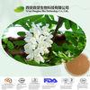natural sophora japonica extract,sophora japonica extract powder,sophora japonica fruit extract