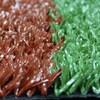 red basketball grass