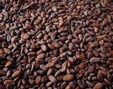 100% Natural Cocoa Extract Powder/ Cocoa P.E.