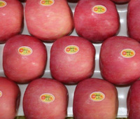 Buy Apples Wholesale From Chinese Fuji Apple
