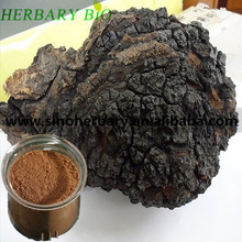 Diabetic food supplement chaga mushroom extract