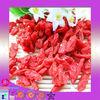 Factory exporting 2013 fresh dried goji berry/Chinese wolfberry