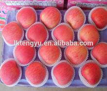 Yantai fresh fuji apple/ Red fresh apple