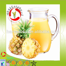 supply tropical fruit juice pineapple juice in bulk with competitive price
