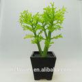 Pasar eco- ambiente certificado de plantas de marihuana para la decoración del hogar