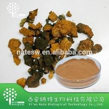 Supply Free Sample Anticancer Chaga Mushroom Extract Powder