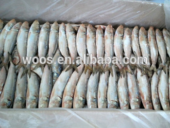 frozen indian oil sardines frozen food wholesale