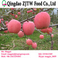 2014 crop fresh apple fruit price