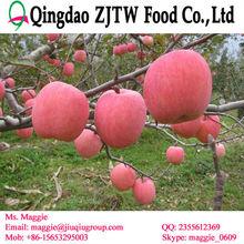 2014 crop fresh apple fruit price