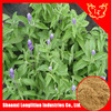 Factory direct sale 100% natural Sage Leaf extract powder