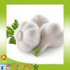supply high quality china cheap garlic fresh normal white garlic