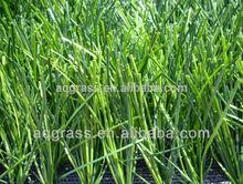 Artificial grass/synthetic turf, diamond yarn