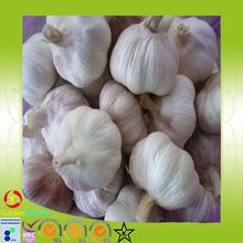 2015 China New and Fresh Natural Garlic /garlic extract
