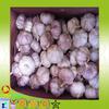 2014 New and Fresh Natural Garlic From China