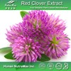 Halal&Kosher Isoflavone Red Clover P.E./Red Clover Isoflavone Powder/Red Clover Powder Extracts