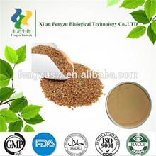 100%Natural Tartary Buckwheat extract