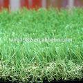 Alta resistencia al desgaste jardín y paisajismo hierba