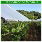 Transparent pe tarpaulin,Clear Tarpaulin,Transparent Tarps