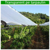 Transparent pe tarpaulin,Clear Tarpaulin,Transparent Tarps