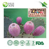 Prickly Pear Extract New Arrival Huixin Biotech Inc. Supplier