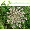 Osthole 10%,98% Hplc/ Common Cnidium Fruit Extract/fructus Cnidii Extract(fructus Cnidium)