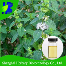 Peppermint Essential Oil Menthol 50%