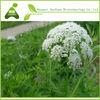 Fructus Cnidii/Osthole 98% Fructus Cnidii Extracts Powder