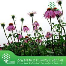 Natural Herb Echinacea Purpurea Extract in bulk