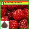 High quality Raspberry powder