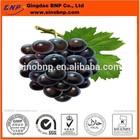 Natural Organic Grape Seed Extract Grape Seed P.E. Powder