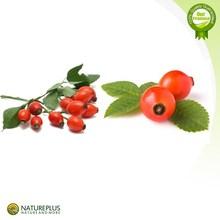 Pure Natural Rose Hip Powder/Wild Rose Fruit Extract Powder