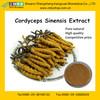 Best Yarsagumba Extract / Cordyceps Extract