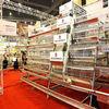 Ladder type chicken cage/chicken layer battery cage/chicken wire mesh cage