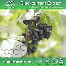 Food Grade Organic Black Currant Powder/Black Currant Seed Oil/Black Currant P.E