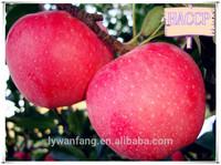 Apple Type and Chinese Variety Apple Bulk Fresh Fruit