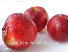 Apple Type and Gala Apple Bulk Fresh Fruit