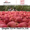 China fuji apple, rojo manzana de inicio, manzana golden delicious