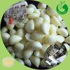 Bulk garlic powder garlic extract lipid garlic extract