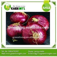 Fresh Baby Onion