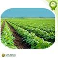 Prix usine extrait de kava kava/poudre d'extrait de kava/kava root extrait