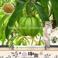 di alta qualità buon prezzo Garcinia Cambogia contenente estratto di frutti di potassio