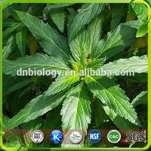 100% Natural Damiana Leaf Extract Damiana Extract
