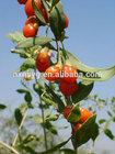 Orgnic Dried Goji Berries