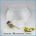 P~many diseños hechos a mano de cristal de la burbuja de aire de la planta& hacer un terrario