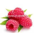 100% natural de framboesa vermelha extrato( cetona da framboesa 98%)