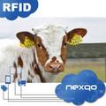 Bestiame marche auricolari di maiale/vacca/ovini/bovini