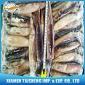 pescados y mariscos congelados calamar nombre científicoillex argentinus squid