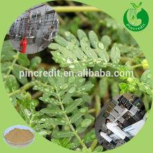 Herbal food tribulus terrestris extract from tribulus terrestris