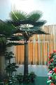 Intérieur& extérieur. palmier artificiel, arbre de noix de coco pour la vente