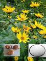 Lainulina/orgánica deinulina/de raíz de achicoria extracto